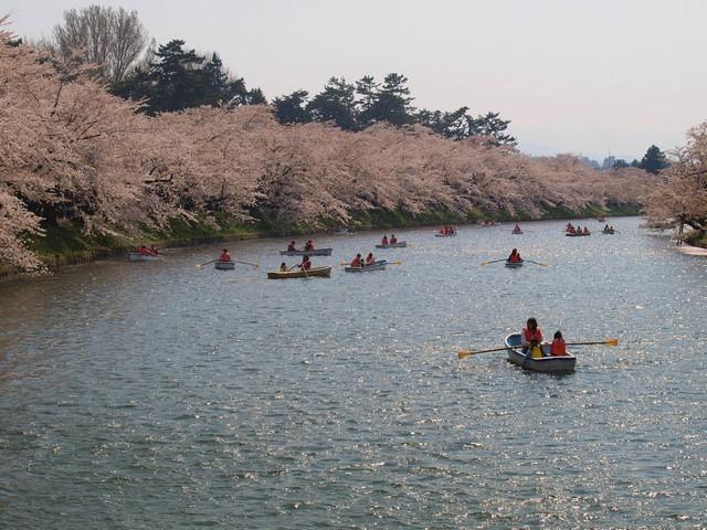 s桜のトンネル9