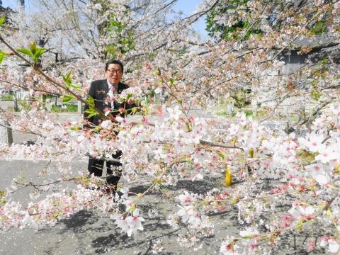 「国分寺の桜」②_R