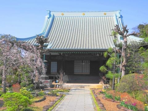 「国分寺の桜」⑪_R