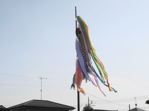 「戸井田家の鯉のぼりが泳ぎだしました!」⑨