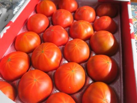 「スーパーフルーツトマト」③