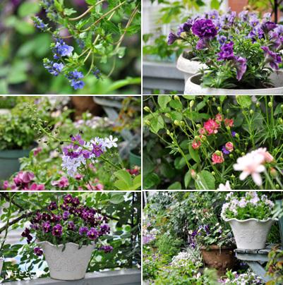 お庭のお花たち。。