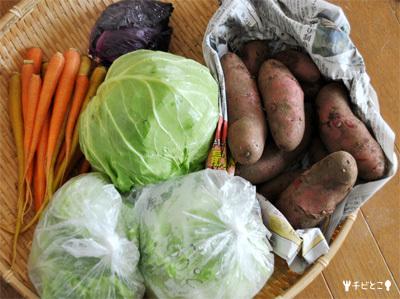 チビとこ菜園。。野菜の収穫。。