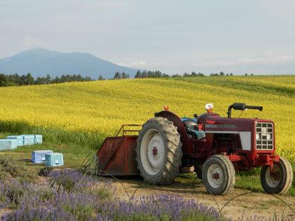 十勝の小麦畑