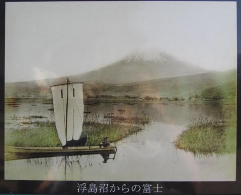 浮島沼からの富士