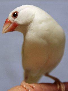 放鳥楽しいね~♪
