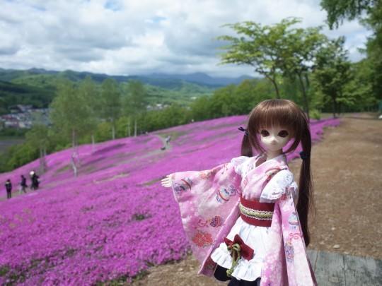 滝上芝桜04