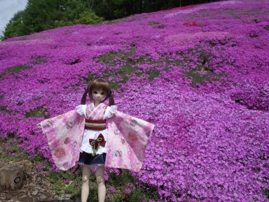 滝上芝桜08