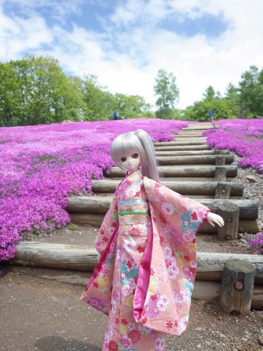 滝上芝桜09