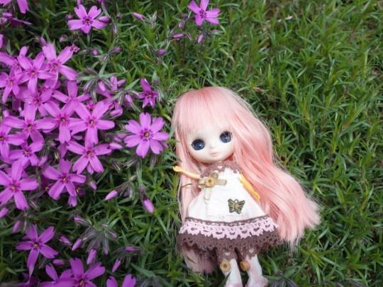 滝上芝桜11