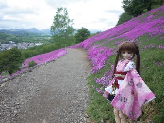滝上芝桜12