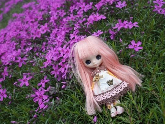 滝上芝桜13