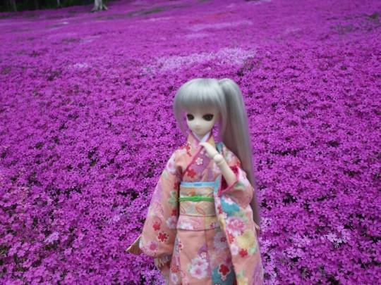 滝上芝桜15