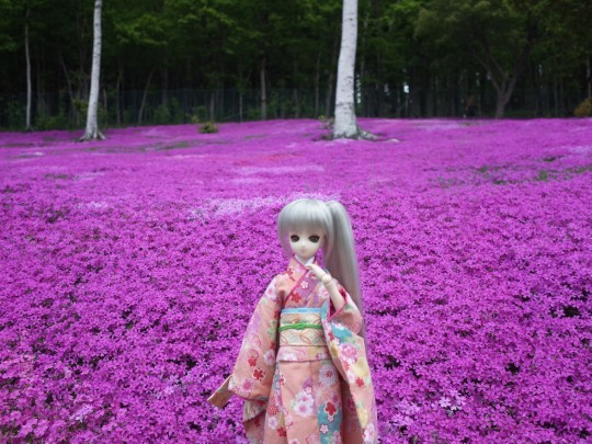 滝上芝桜14