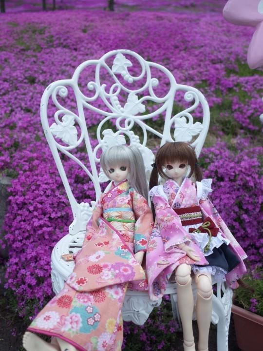 滝上芝桜18