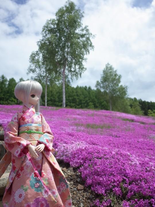 滝上芝桜20