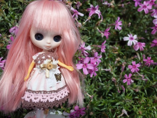 滝上芝桜22