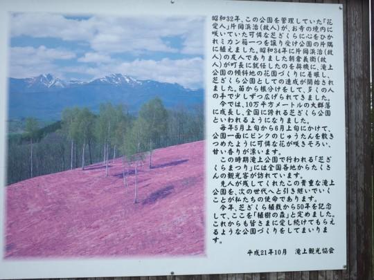 滝上芝桜24