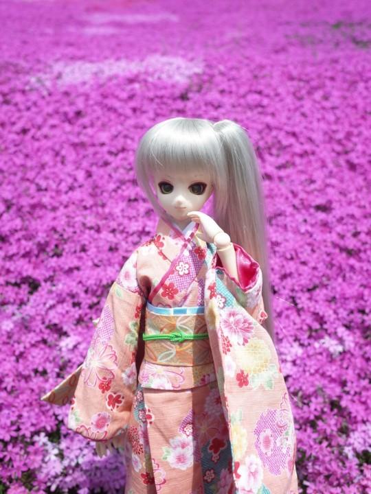滝上芝桜23