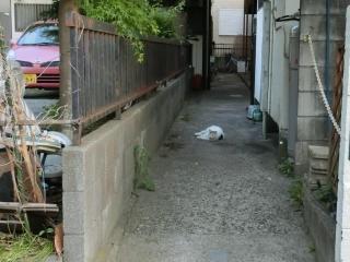 20180505-ご近所外猫-02