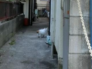 20180505-ご近所外猫-04