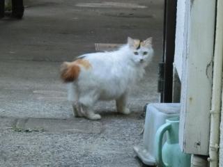 20180505-ご近所外猫-06