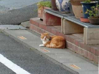 20180505-ご近所外猫-09