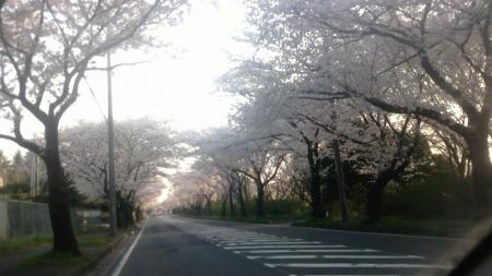 NEC_0110桜