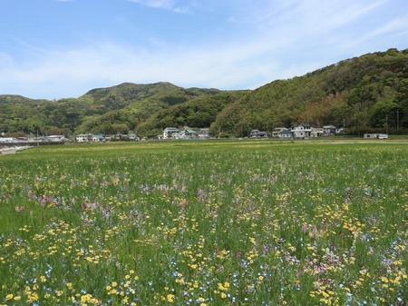 松崎花 (5)