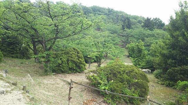 180517 王子が岳⑦ ブログ用