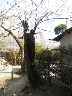 2018sakura29.jpg