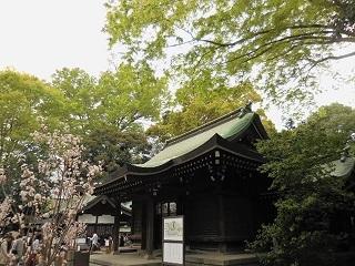 shinryokuhikawa.jpg