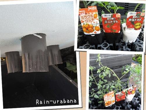3品種のトマト♪