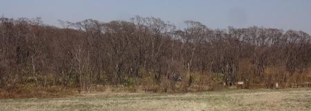 マクンベツ湿原の入り口