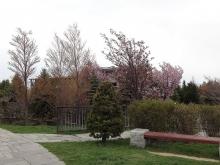 展望台から見たリラックスプラザの方に桜があります