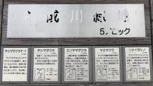 創成川緑地 5ブロック