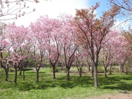 桜モールで