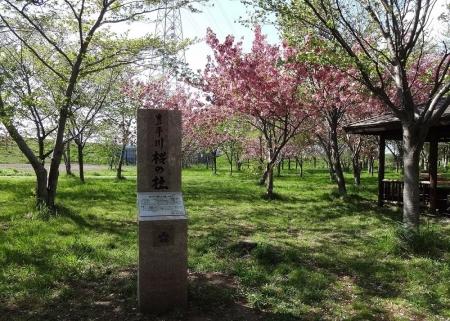 豊平川桜の杜の碑