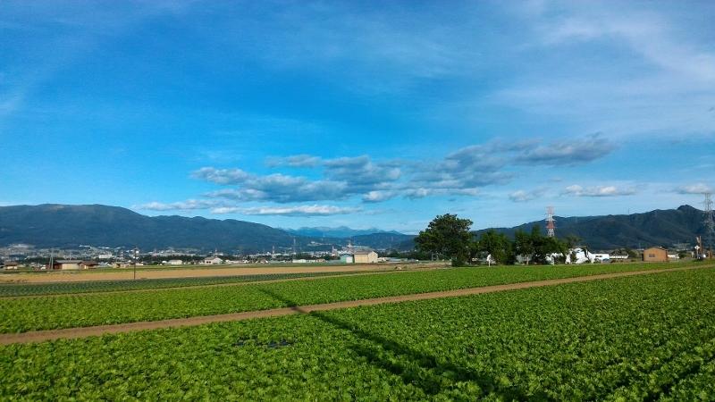 実家の近くの畑と遥かに八ヶ岳