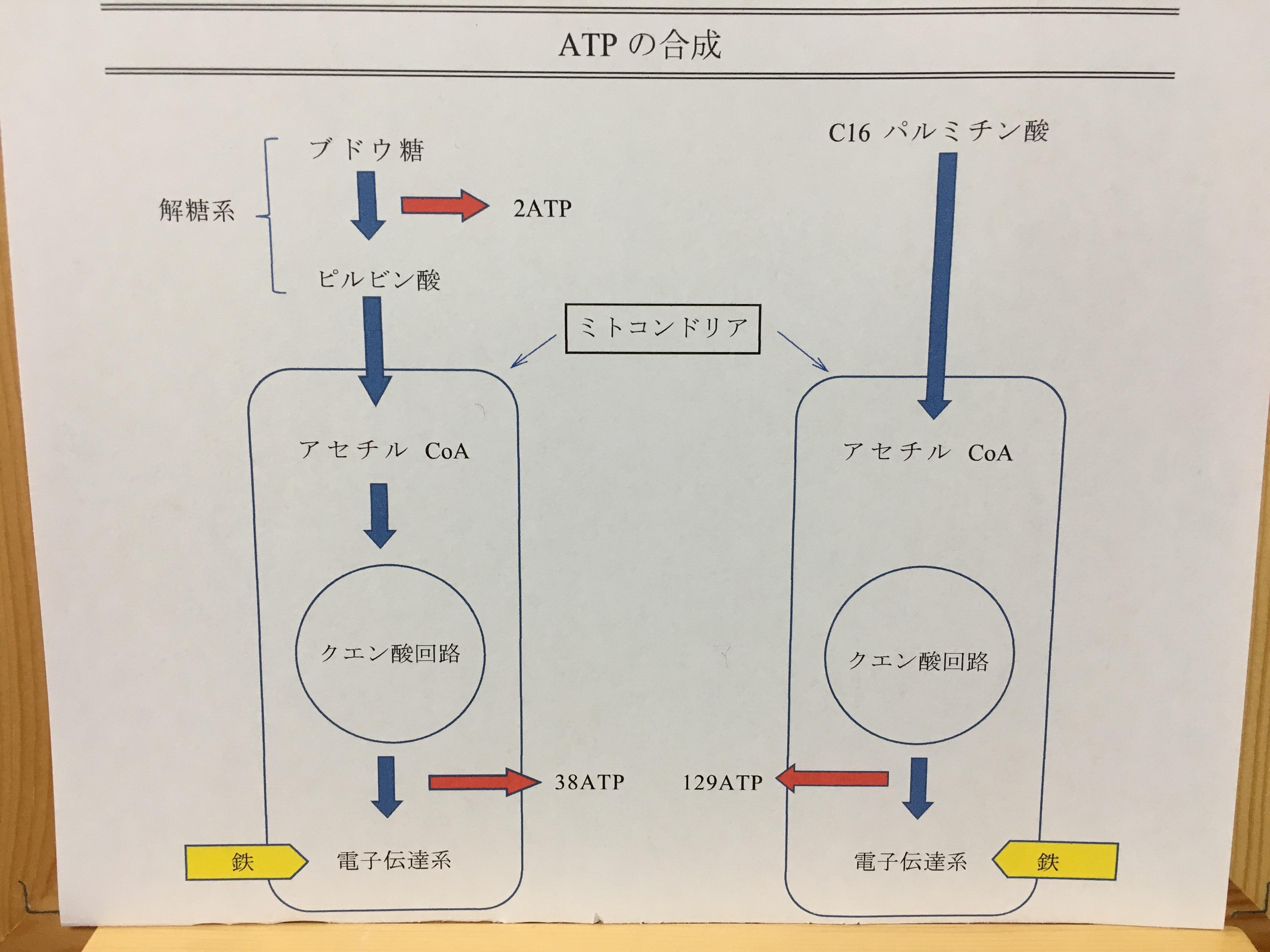 ATPの合成