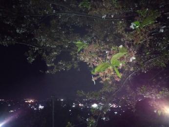 葉桜と街のあかり2018