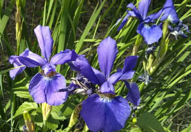 近寄って確認した散歩道の花