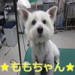 IMG_0017 (2)