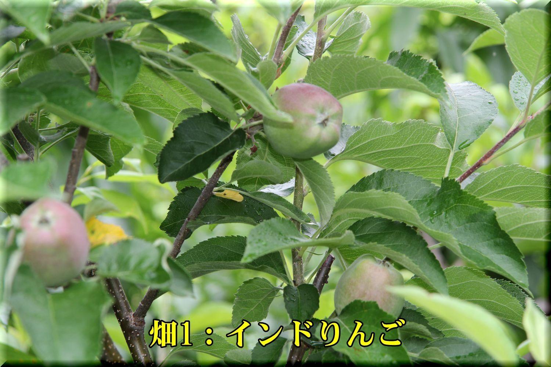 1DC180531_020.jpg