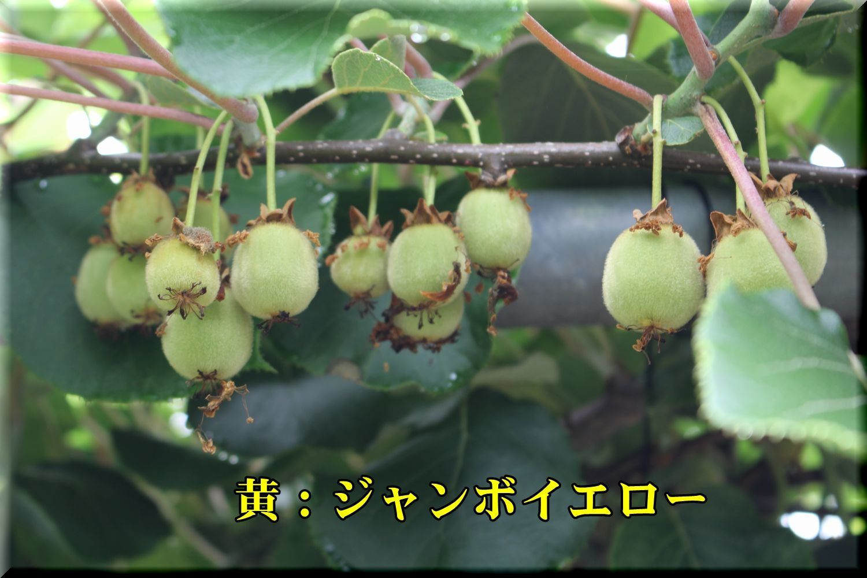 1JY180525_006.jpg