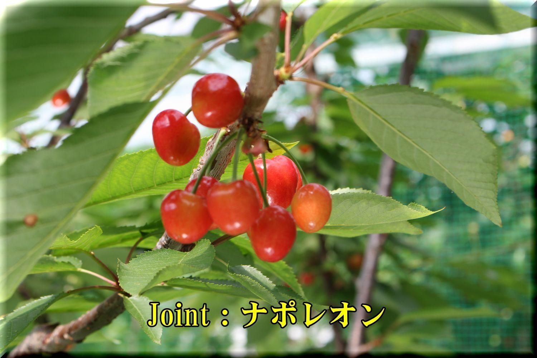 1Jnapole180529_021.jpg