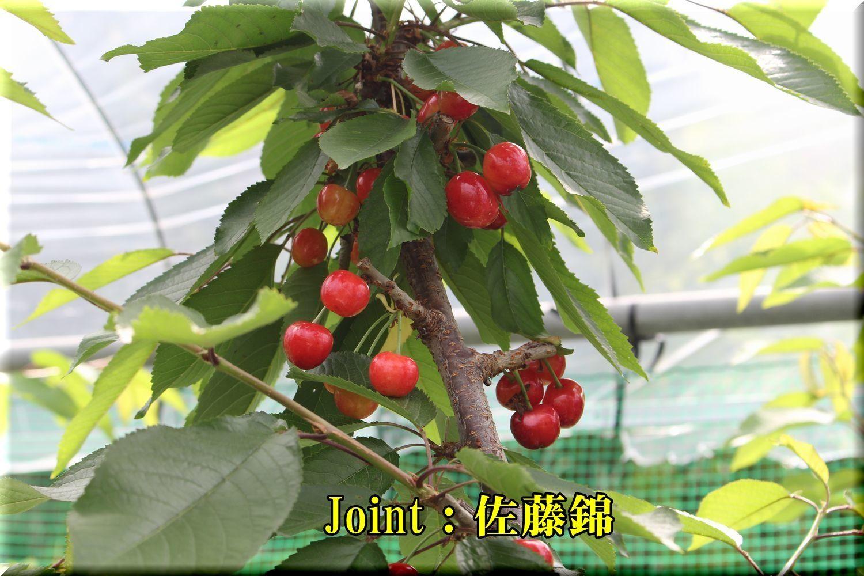 1Jsato180529_003.jpg