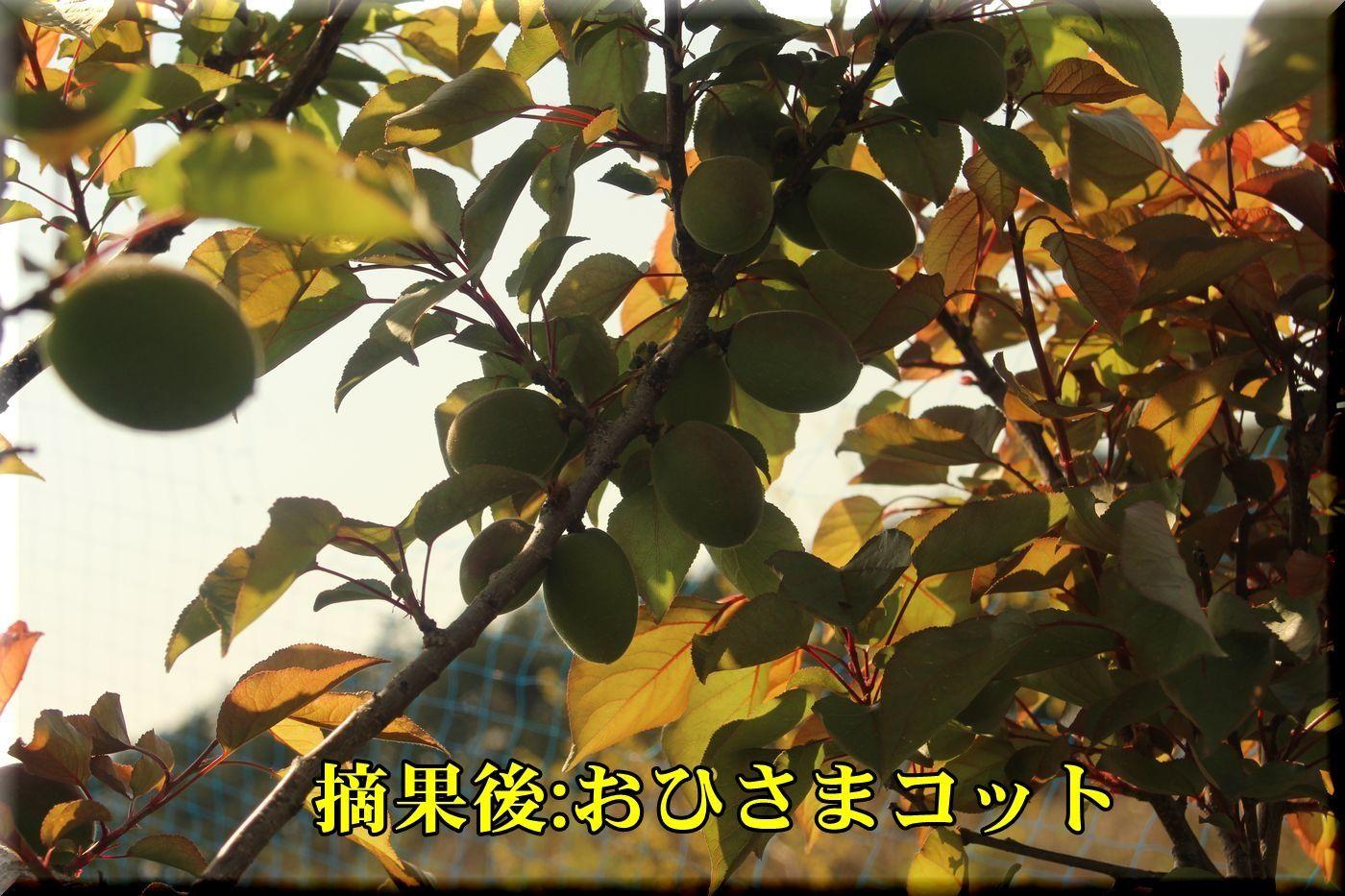 1T_ohisama180420_012.jpg