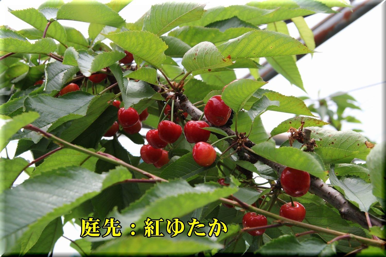 1_beniyutaka180529_051.jpg