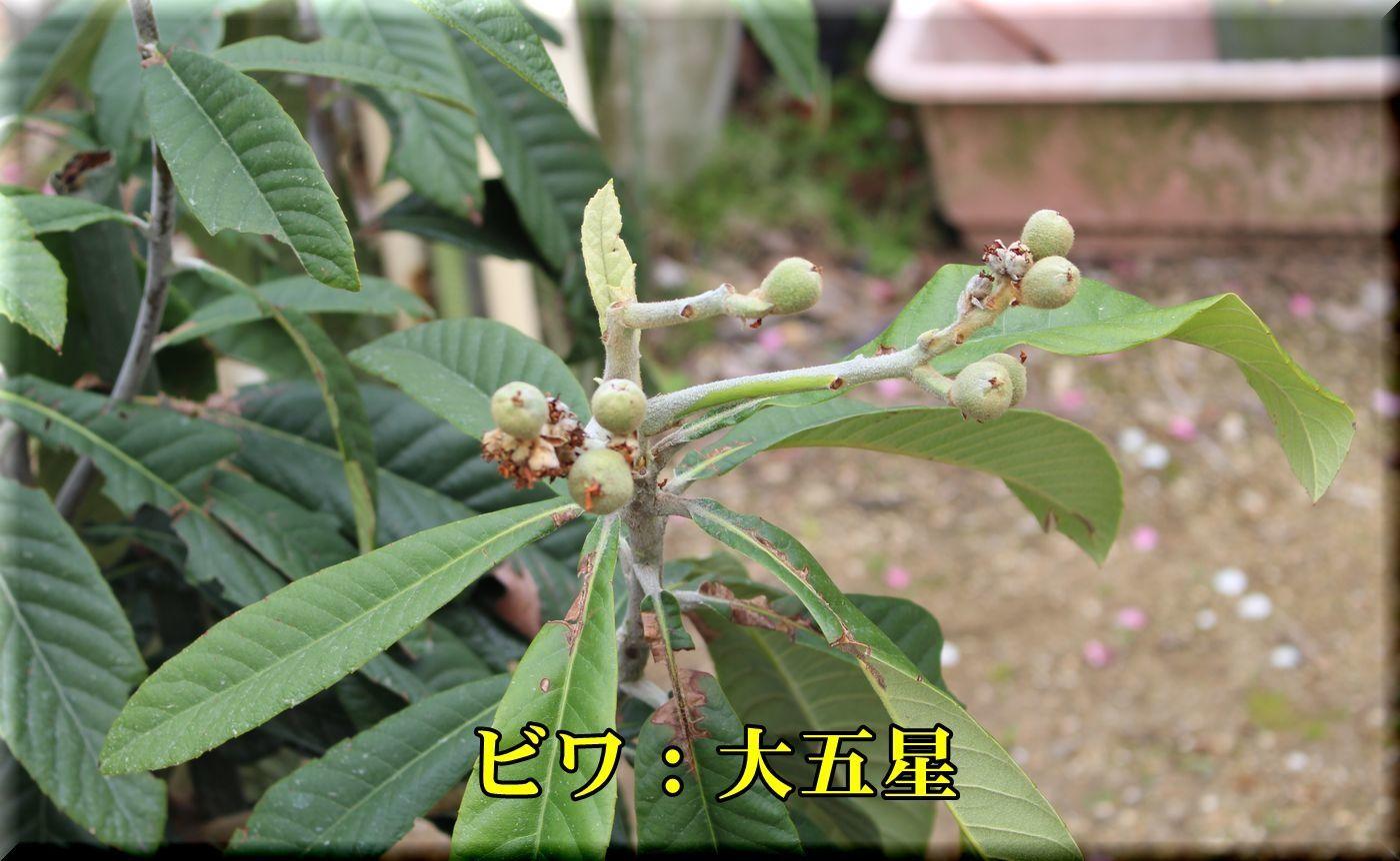 1daigosei180405_035.jpg